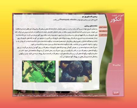 مولتی مدیا آموزش کاشت و پرورش انگور