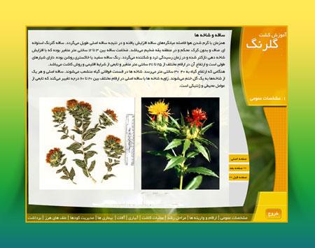 مولتی مدیای آموزش کاشت و پرورش گیاه گلرنگ