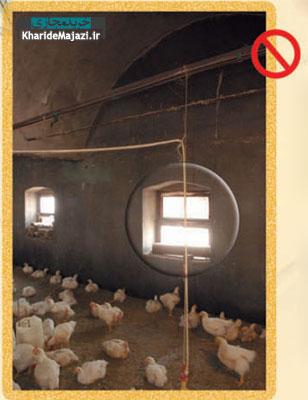 بهبود عملکرد در واحدهای مرغداری گوشتی