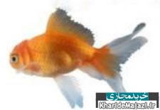 راهنمای نگهداری و مراقبت از ماهی قرمز
