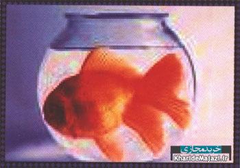 بهداشت و نگهداری ماهی قرمز