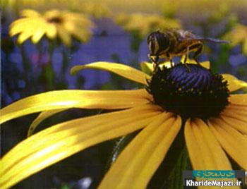 آشنایی با محصولات زنبور عسل