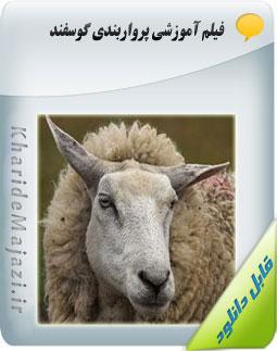 فیلم آموزشی پرواربندی گوسفند