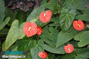 معرفی 15 نوع گل