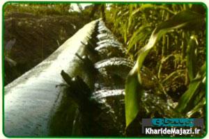 آشنایی با روش آبیاری هیدروفلوم