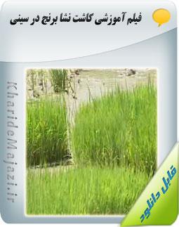 فیلم آموزشی کاشت نشا برنج در سینی