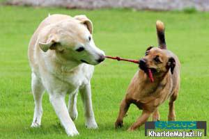 مقاله جامع درباره رفتارشناسی سگ