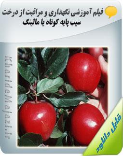فیلم آموزشی نگهداری و مراقبت از درخت سیب پایه کوتاه یا مالینگ