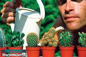 آبیاری گیاهان در روزهای تعطیل و سفر چگونه انجام می شود؟
