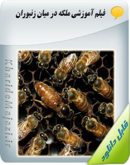 فیلم آموزشی ملکه در میان زنبوران