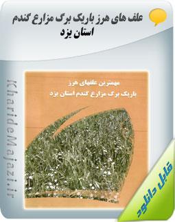 علف های هرز باریک برگ مزارع گندم استان یزد