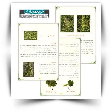 کتاب آموزشی اسفناج