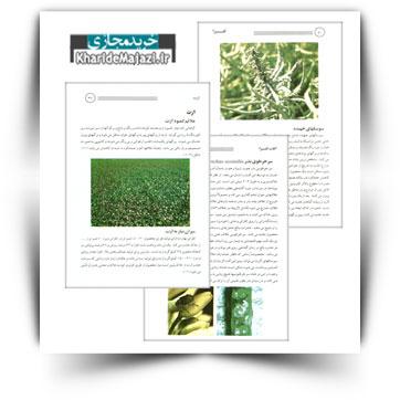 کتاب آموزشی زراعت کلزا
