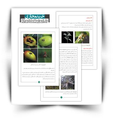 کتاب آموزشی نحوه هرس، تغذیه و کنترل آفات و بیماری های زیتون