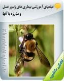 فیلم های آموزشی بیماری های زنبور عسل و مبارزه با آنها Image