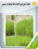فیلم آموزشی کاشت نشا برنج در سینی Image