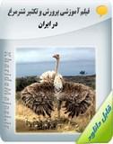 فیلم آموزشی پرورش و تکثیر شترمرغ در ایران Image