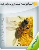 فیلم آموزشی 2 قسمتی پرورش زنبور عسل Image