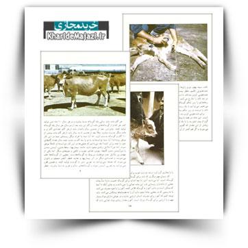 بهداشت و مراقبت از گوساله در دوران آبستنی و بعد از آن