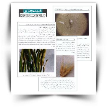 کتاب آموزشی اهمیت بیماری لکه قهوه ای نواری در مزارع جو ایران و روش های کنترل آن